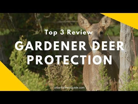 How to Secure your Garden from Deer: Top 3 Gardener Deer Protection