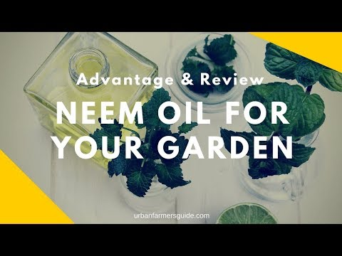 The Advantages of using Neem Oil for Your Garden