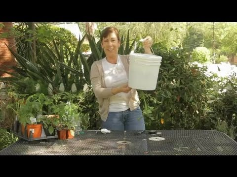 7 Easy Steps How to Grow Tomato Plant Upside Down 1