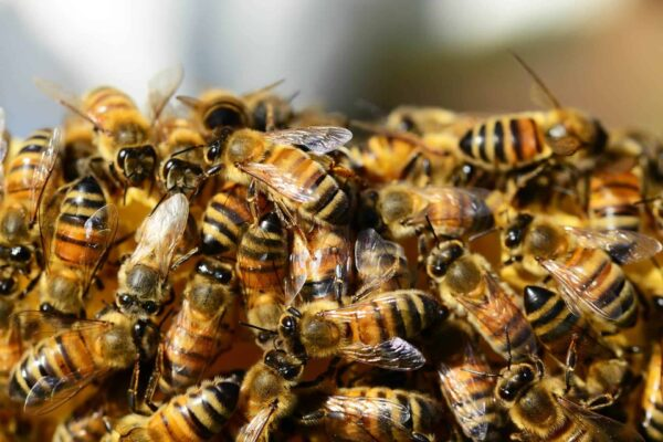 The Guide to Acquiring the Bees: How, Where and Where Order Bees
