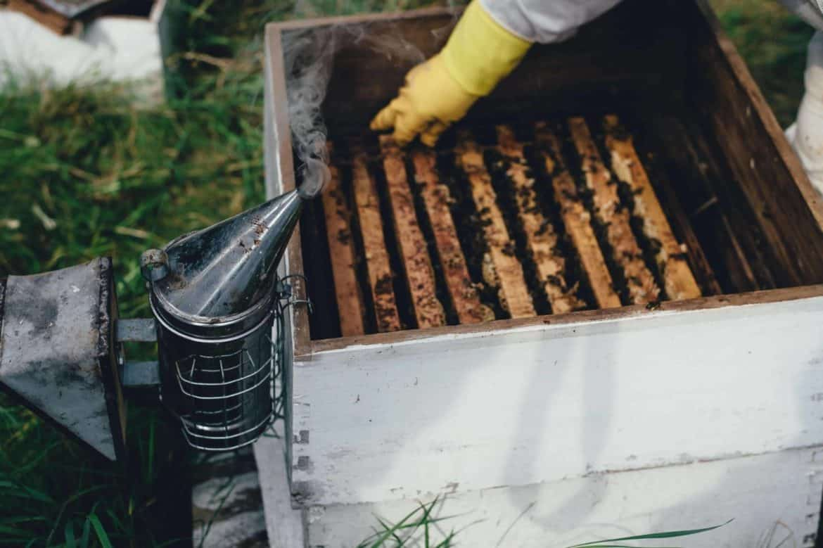 The Guide to Beekeeping Equipment Names and Pictures