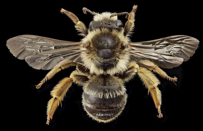 The Queen Bee Guide for Beekeeping