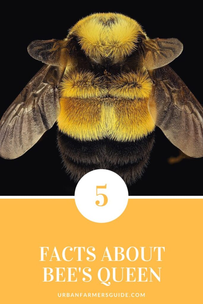 All What you need to know about The Queen Bee