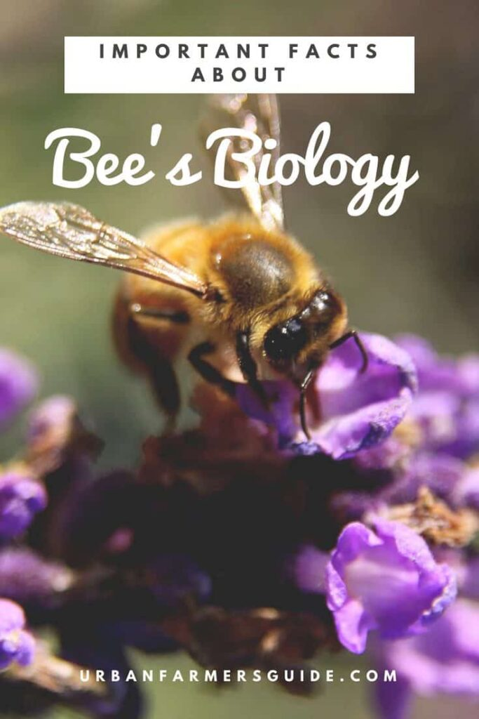 Important Facts about Bees Biology Pinterest