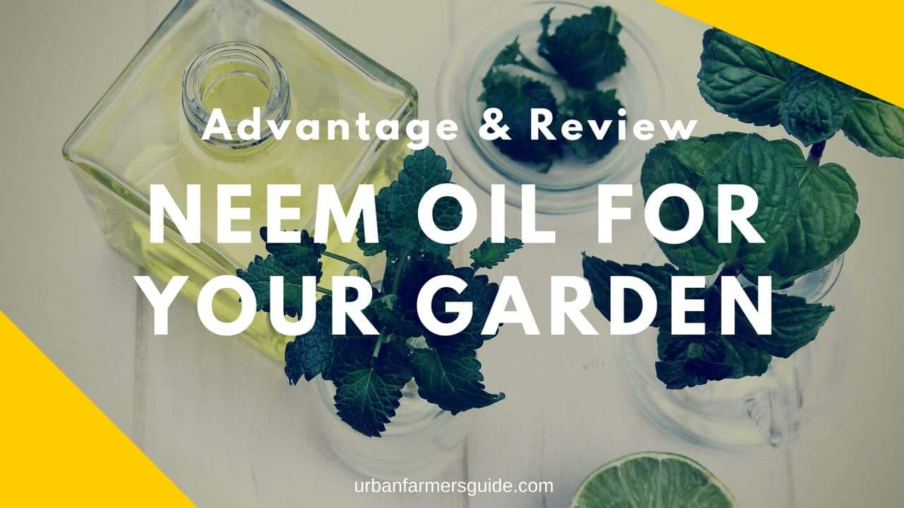 The Advantages of using Neem Oil for Your Garden (1)