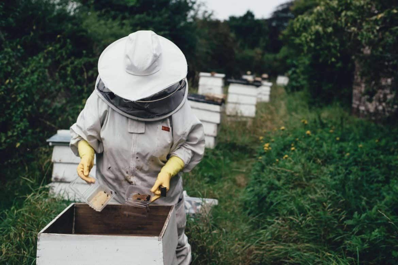 The Best BeeKeeping Starter Kit & Tools