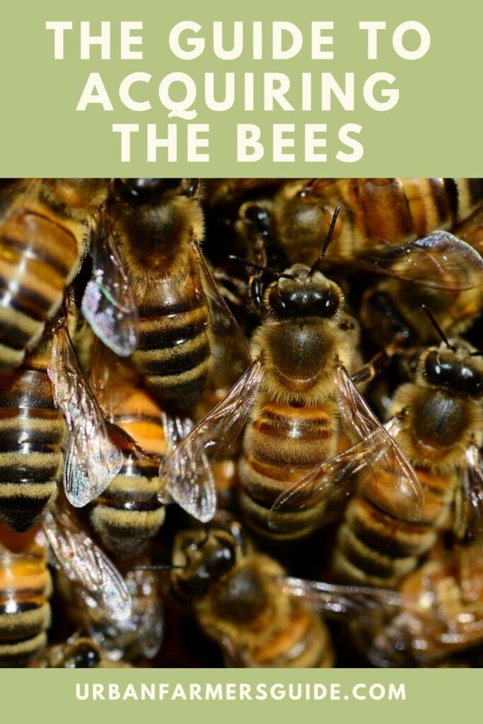 The Guide to Acquiring the Bees_ How, Where and Where Order Bees
