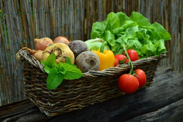 The Organic Vegetable Gardening Ultime Guide 101