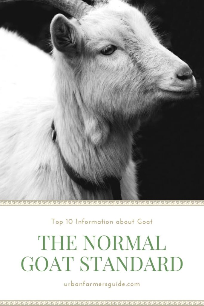 Top 10 Information about Goats to Know _ The Normal Goat Standard Pinterest