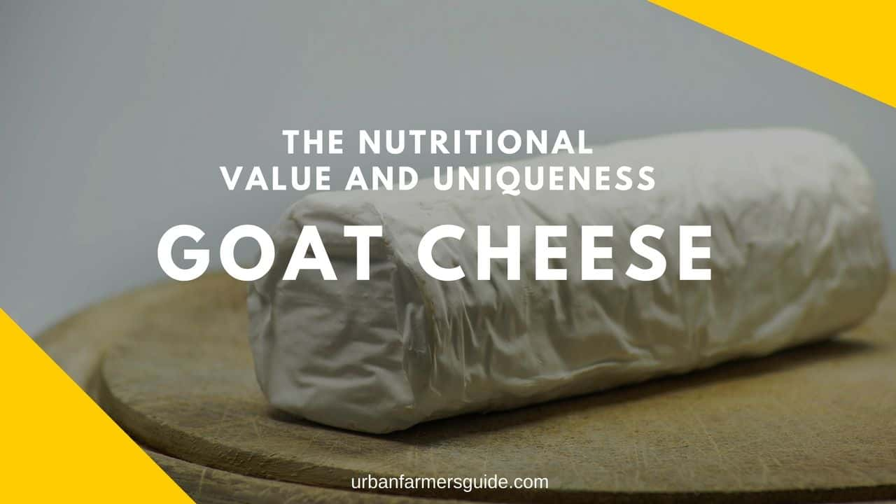 Goat Cheese_ The Nutritional Value And Uniqueness