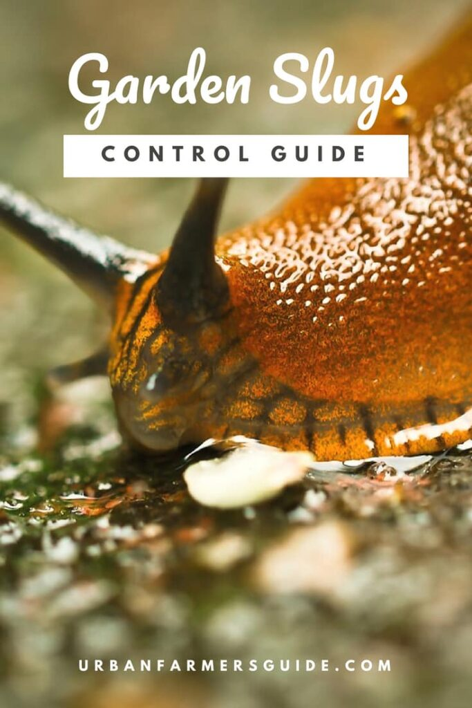 All What you need to know to Control Garden Slugs Pinterest