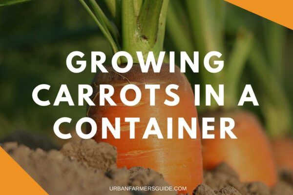 Growing Carrots In A Container
