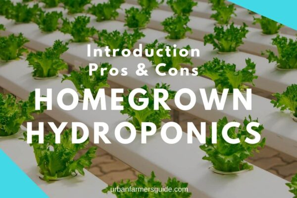 Homegrown Hydroponics_ Introduction, Pros & Cons