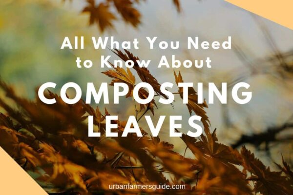 How to Compost Leaves the Easy Way The Beginner Guide To Compost Leaves: Benefits, Steps & Tips