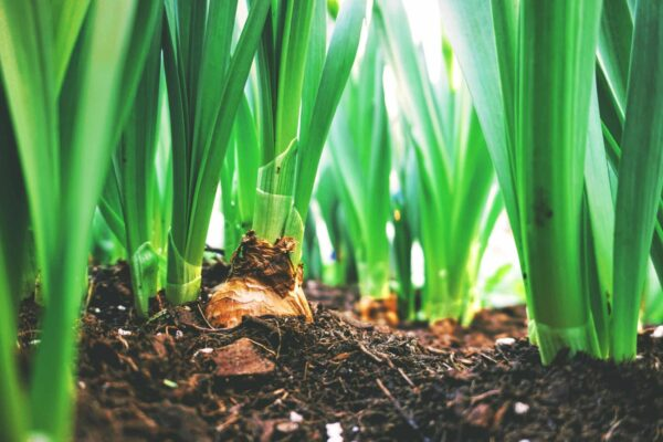 How to Compost : The 3 Easy Steps to Start Good Composting How to Compost The 3 Easy Steps to Start Good Composting