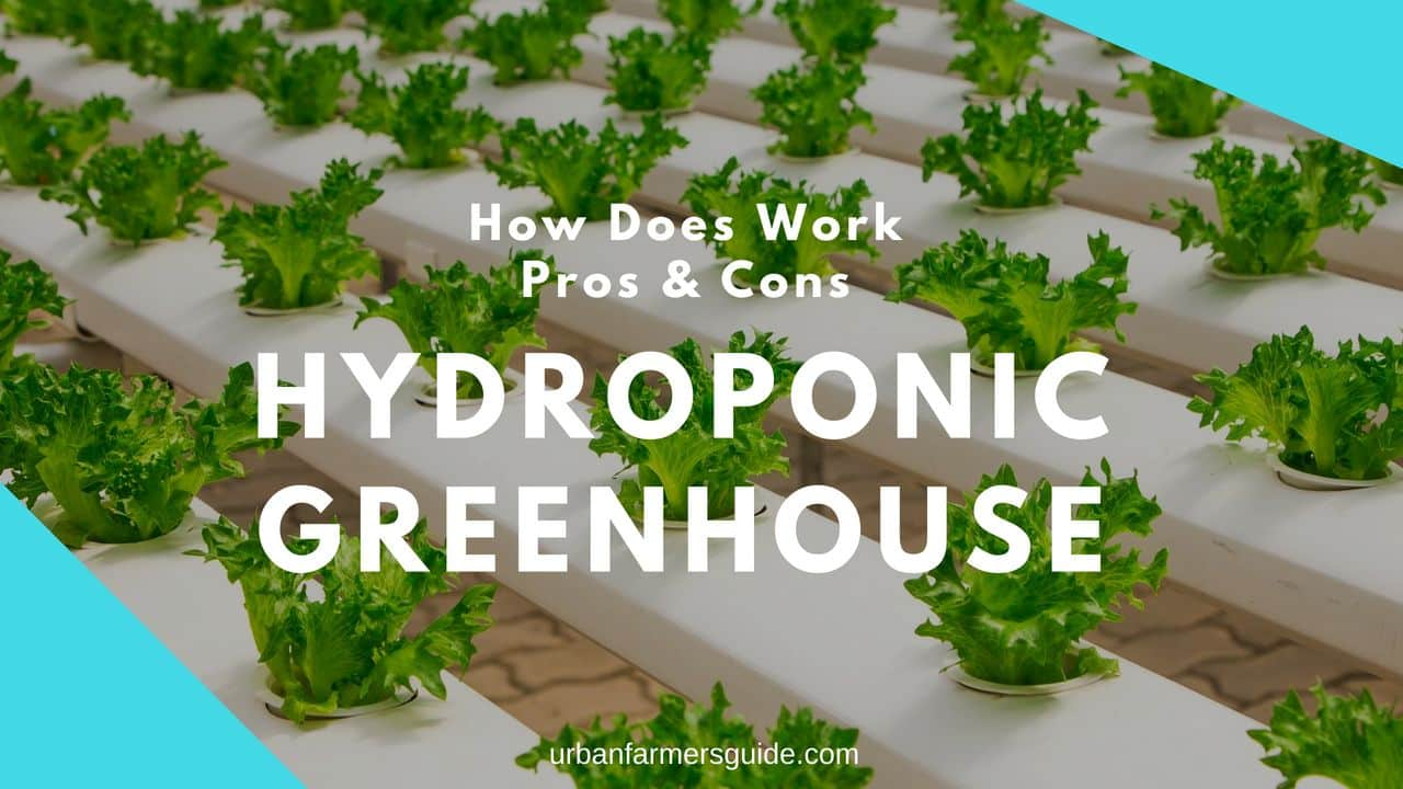 Hydroponic Greenhouse_ How Does Work, Pros & Cons
