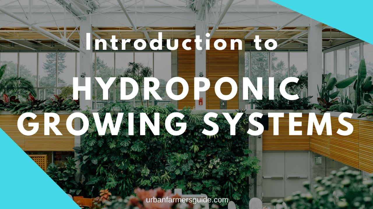 Introduction to Hydroponic Growing Systems