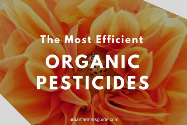 The Most Efficient Organic Pesticides