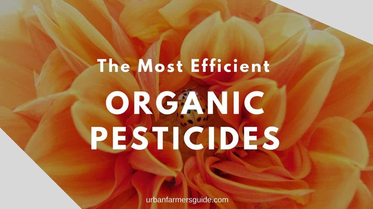 The Most Efficient Organic Pesticides