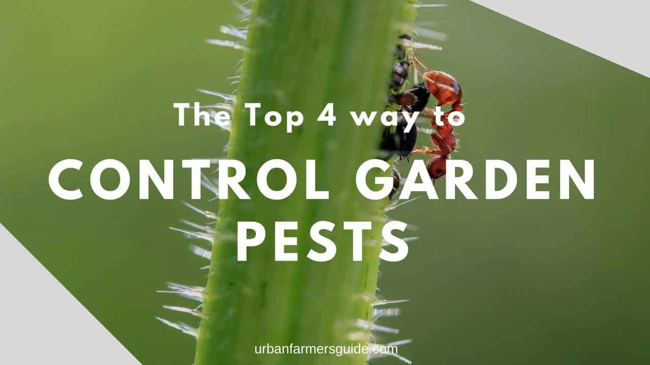 The Top 4 way to Control Garden Pests