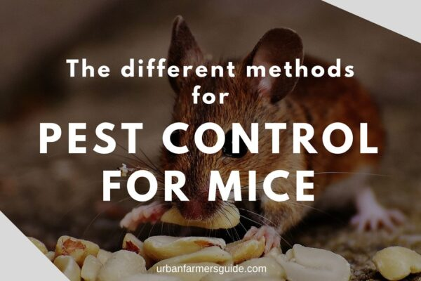 The different Pest Control For Mice Methods