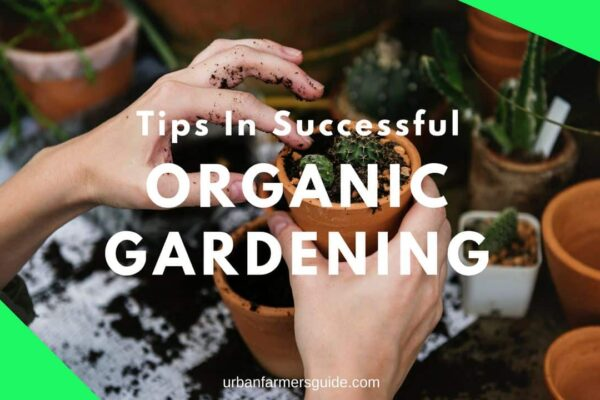 Tips In Successful Organic Gardening