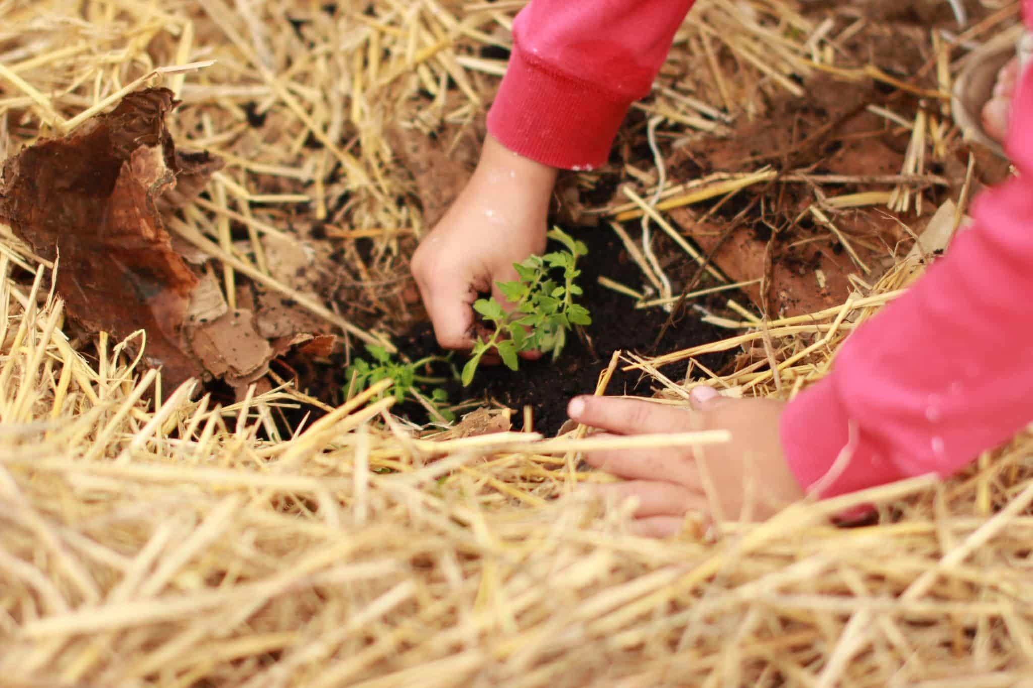 Top 10 Organic Garden Tips Urban Farming Guide