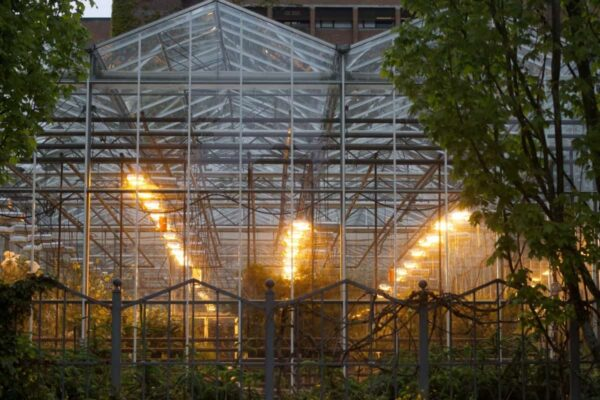 Top 3 Tips for Hydroponic Grow Lights