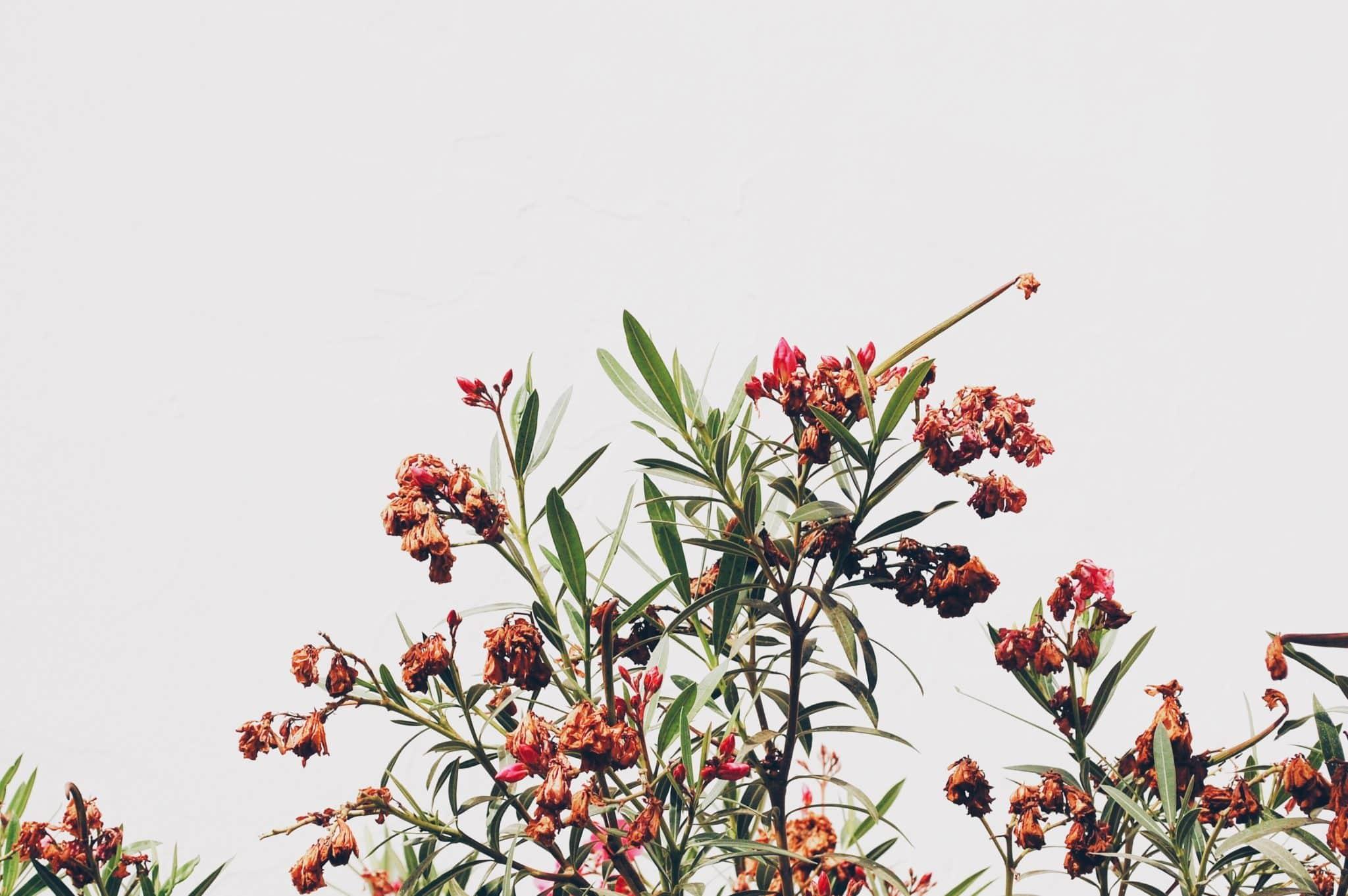 Useful 7 Beginners Steps How to Make an Organic Garden