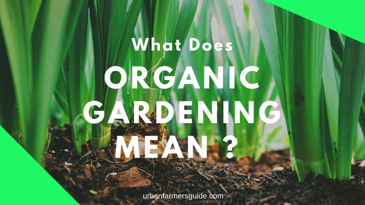 What Does Organic Gardening Mean_