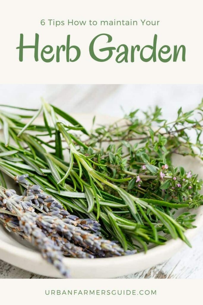 6 Tips How to maintain Your Herb Garden Pinterest