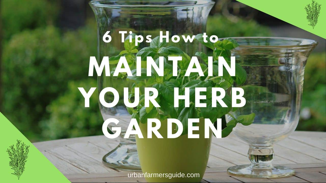 6 Tips How to maintain Your Herb Garden