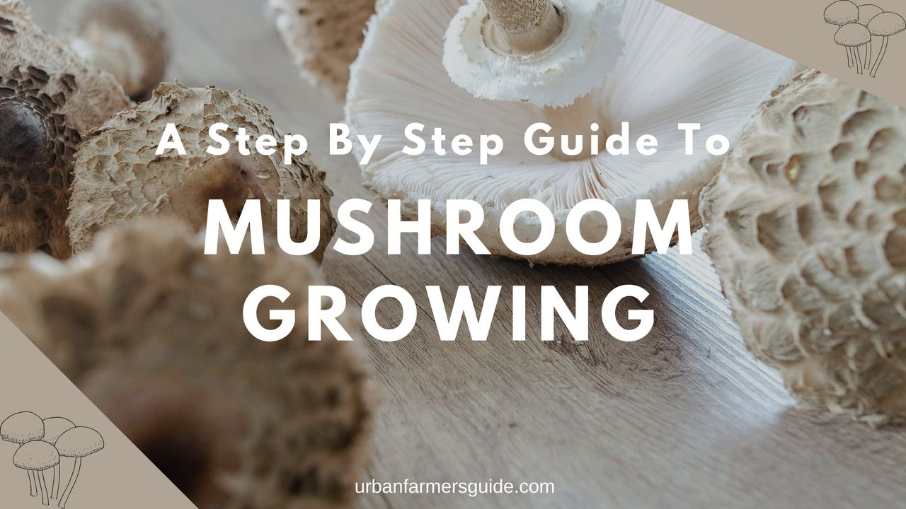 A Step By Step Guide To Mushroom Growing