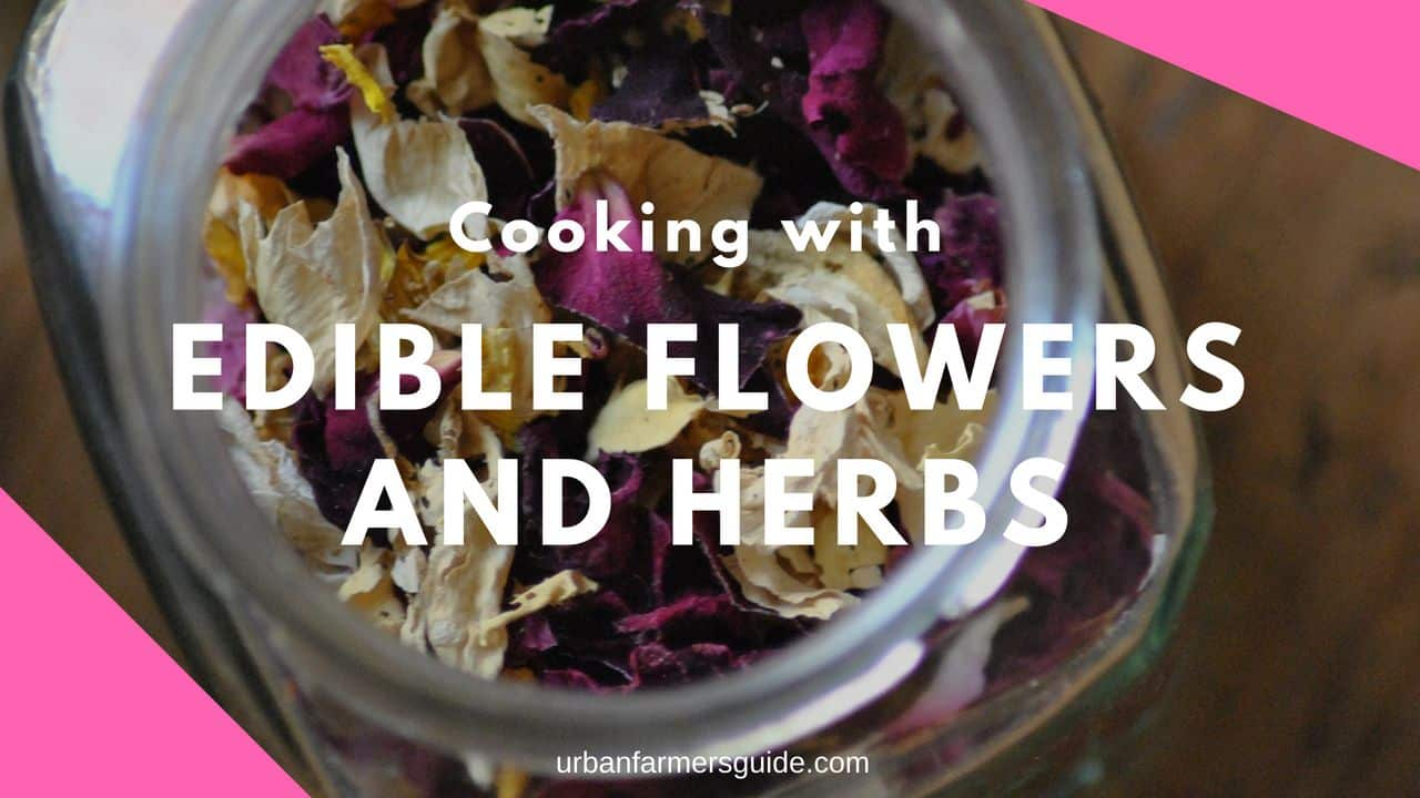Cooking with Edible Flowers and Herbs