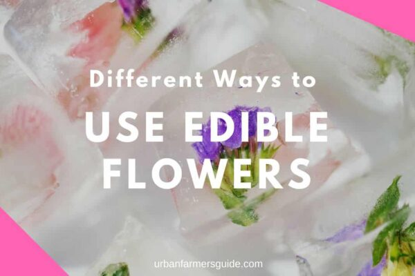 Different Ways to Use Edible Flowers