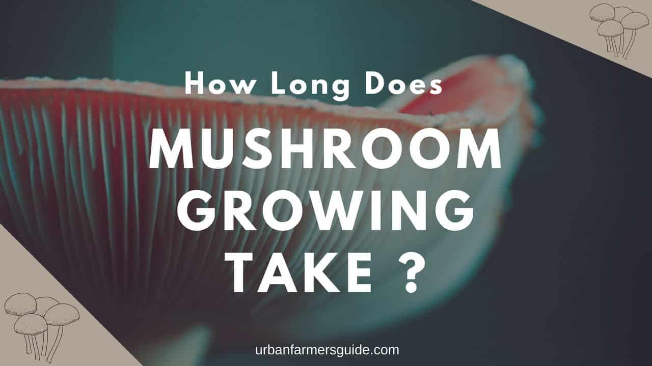 How Long Does Mushroom Growing Take