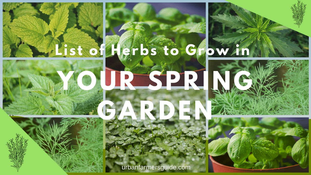 List Of Herbs To Grow In Your Spring Garden