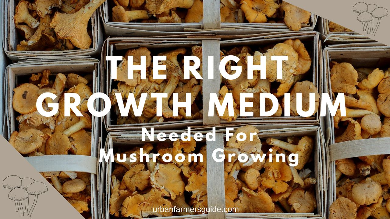 Making The Right Growth Medium Needed For Mushroom Growing