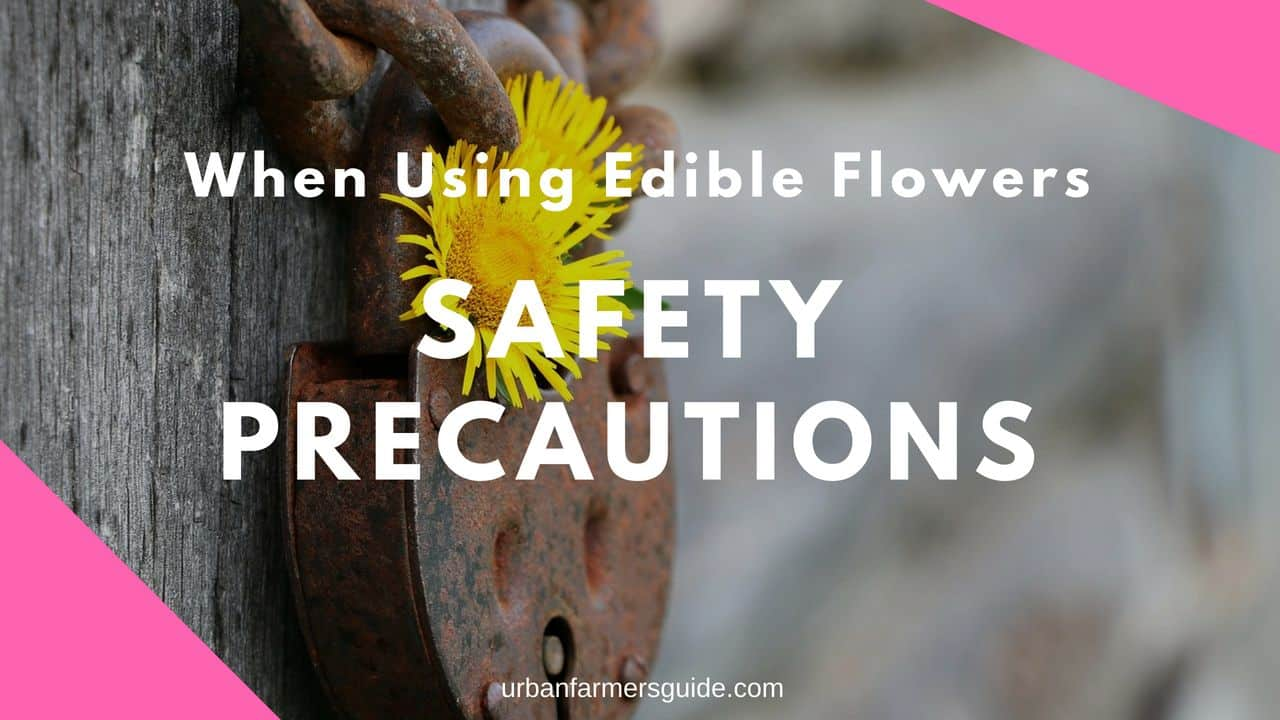 Safety Precautions When Using Edible Flowers