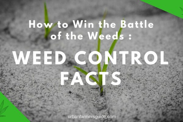 Some Weed Control Facts_ How to Win the Battle of the Weeds Some Weed Control Facts_ How to Win the Battle of the Weeds