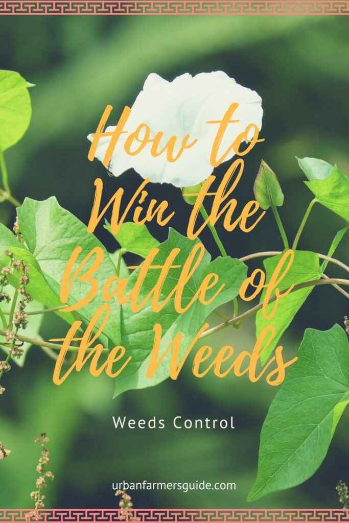 Some Weed Control Facts_ How to Win the Battle of the Weeds Pinterest