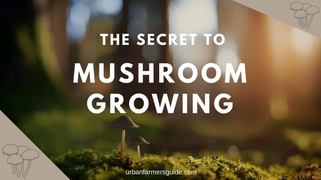 The Secrets To Mushroom Growing
