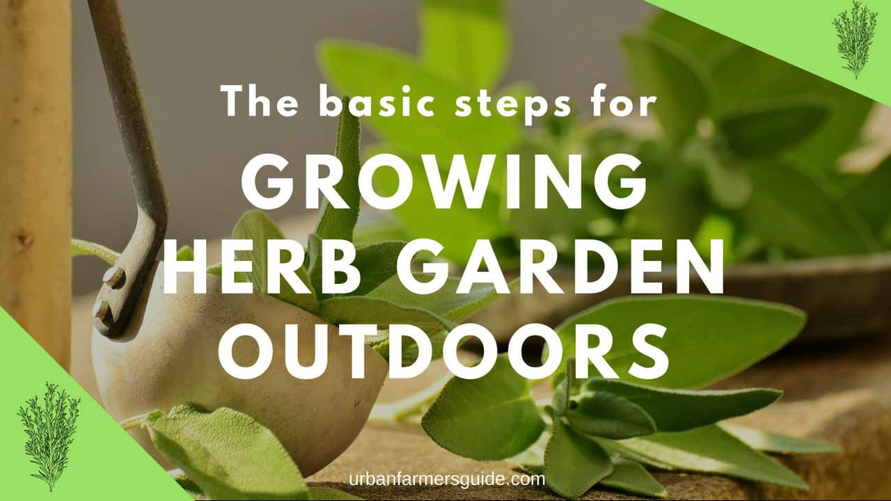 The basic steps for growing an herb garden outdoors
