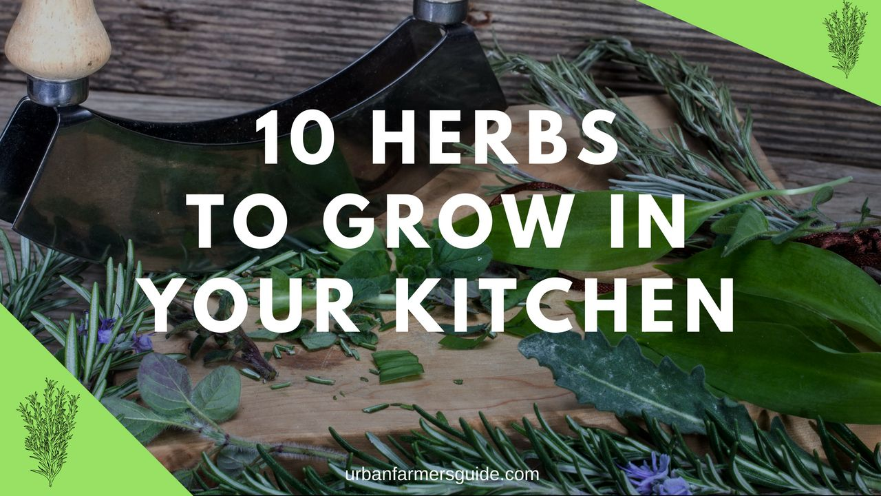 The most common 10 Herbs to Grow in Your Kitchen