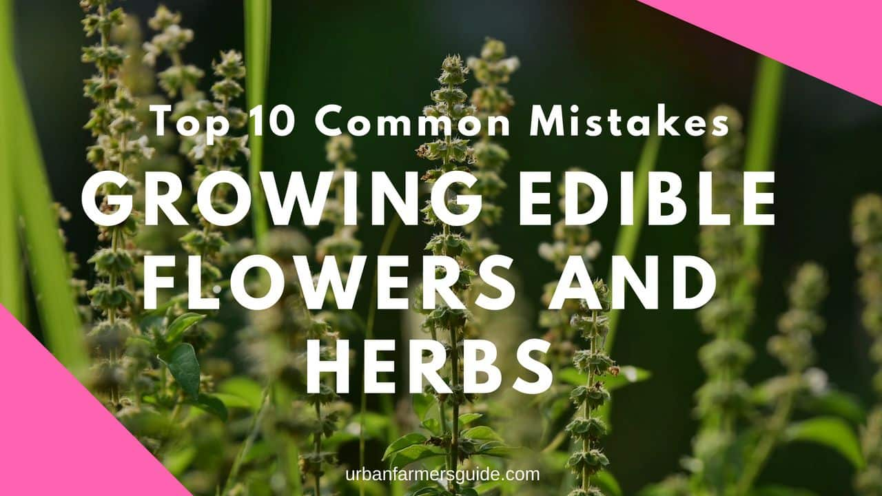 Top 10 Common Mistakes New Gardeners Make When Growing Edible Flowers and Herbs