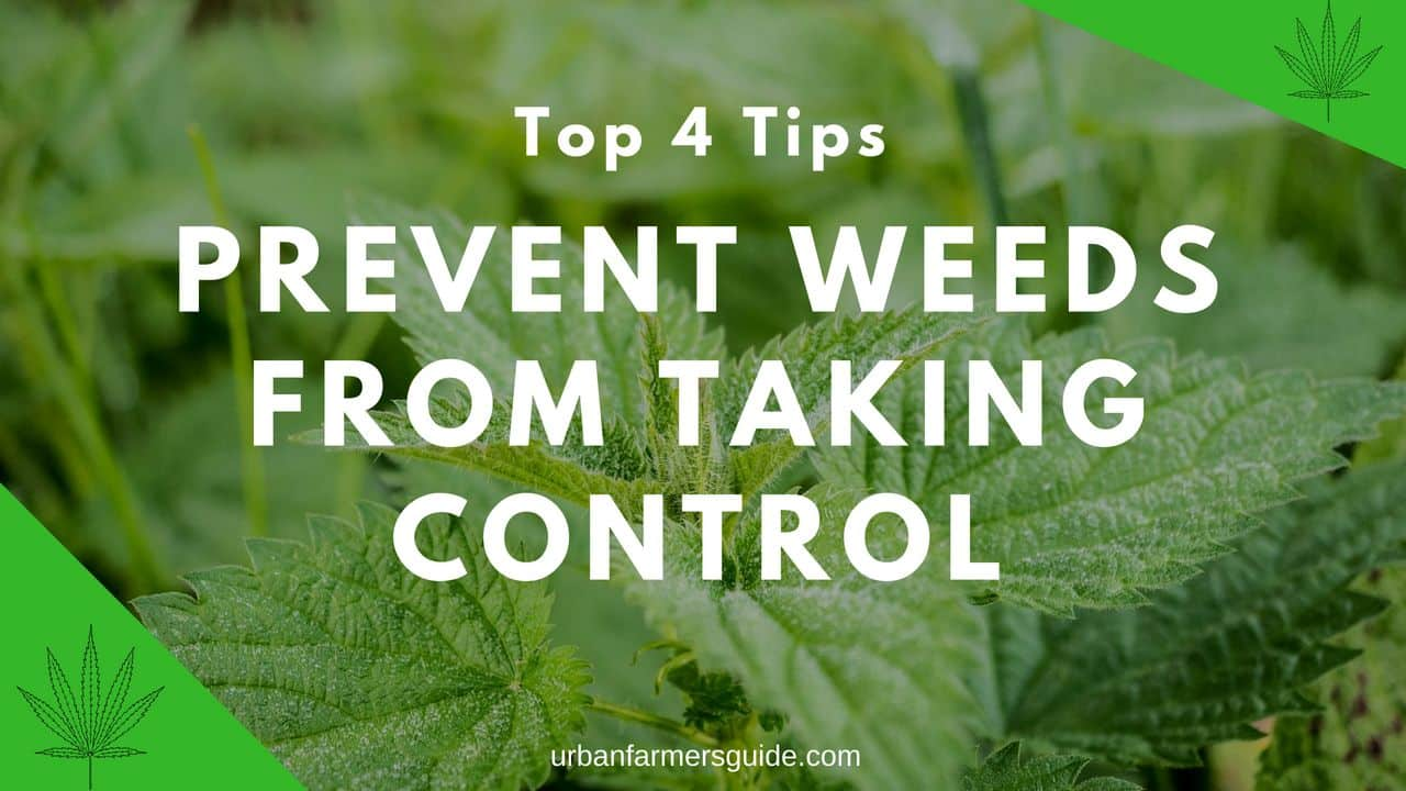 Top 4 Tips to Prevent Weeds from Taking Control - Weed Control