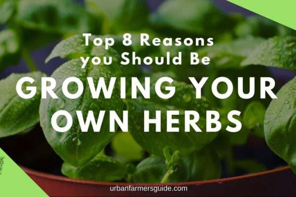 Top 8 Reasons You Should Be Growing Your Own Herbs