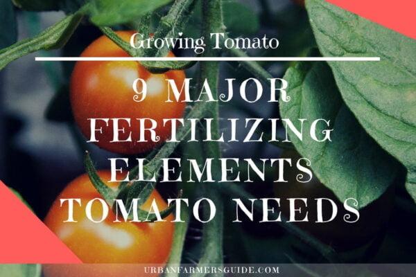 9 Major Fertilizing Elements Tomatos Plant Needs