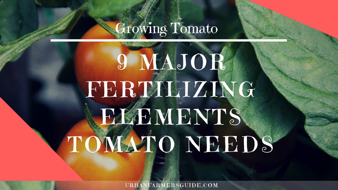 9 Major Fertilizing Elements Tomatos Plant Needs
