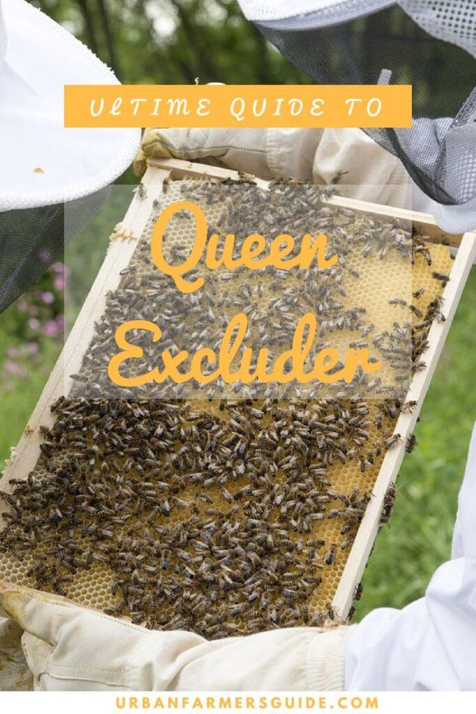 All About Queen Excluder & Top 5 Queen Excluder Pinterestr